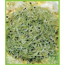Китайский лук - порей Органик