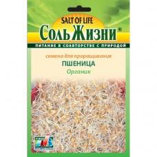 Пшеница семена Органик
